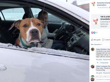 Perro vuelve a casa tras ser robado