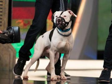¿Te gustaría adoptar a Cebrián, un perrito que necesita una familia que le dé mucho cariño y tranquilidad?
