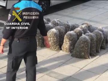 Operación de la Guardia Civil contra la venta de almejas en mal estado