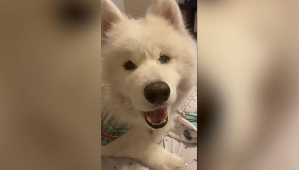 Nanuk, el perro que se ha vuelto viral
