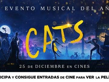 Cocurso 'Cats'
