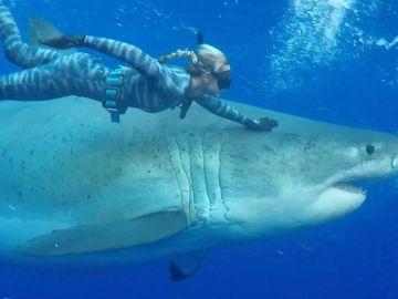 Buceadora nada con un tiburón