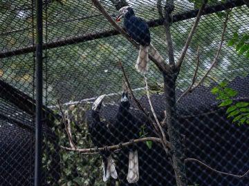 Más de 22.000 personas compran un zoo en Francia para dejar a sus más de 500 animales en libertad