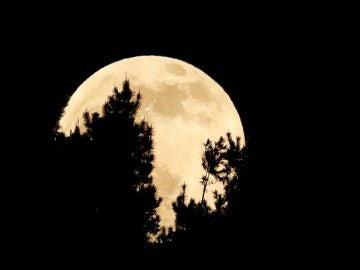 La luna se esconde tras los árboles durante el eclipse penumbral
