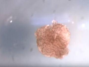 Biobot creado por científicos de Estados Unidos
