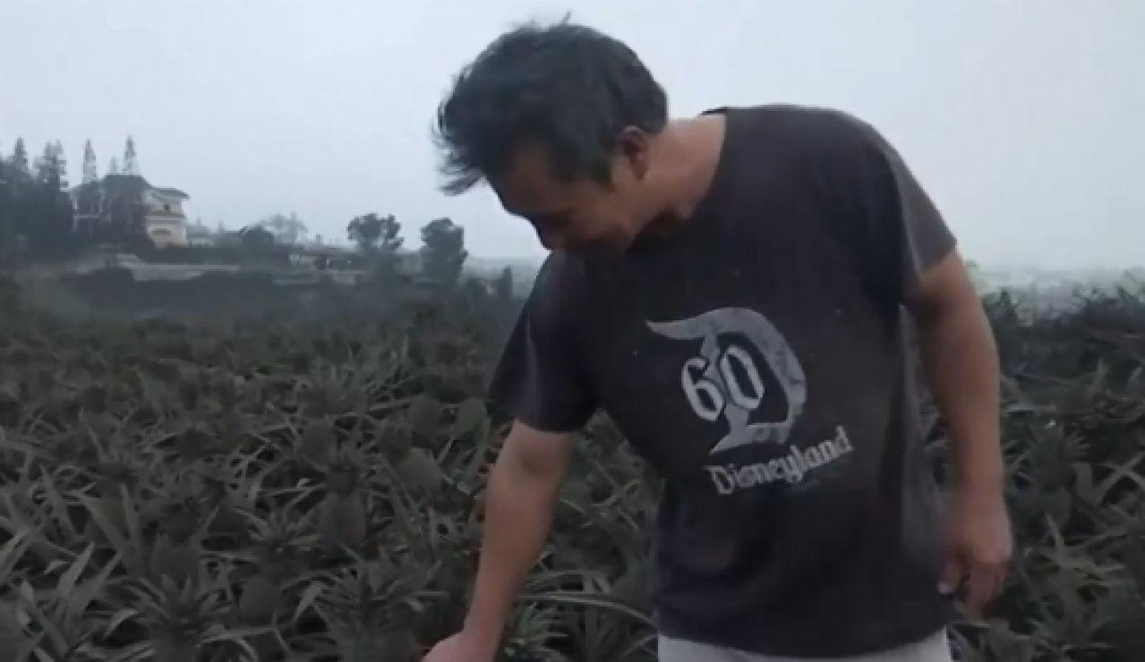 Las cenizas del volcán Taal de Filipinas arruinan las cosechas de los alrededores