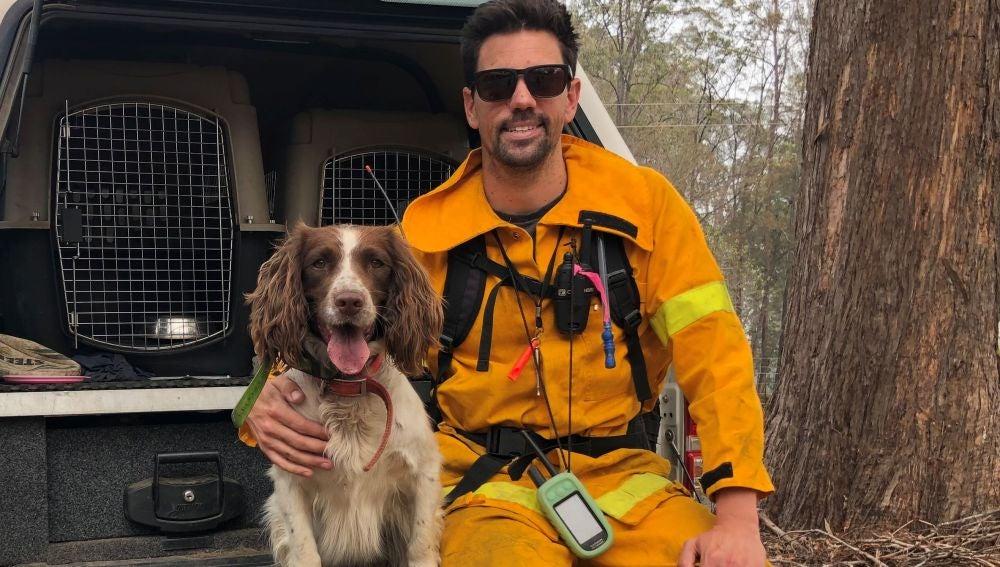 Taylor, el perro que ayuda a rescatar koalas en Australia