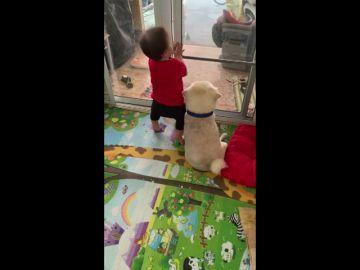 El adorable vídeo de un niño pequeño abrazando a su perro mientras miran por la ventana