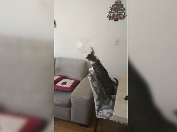 Jacinto el gato