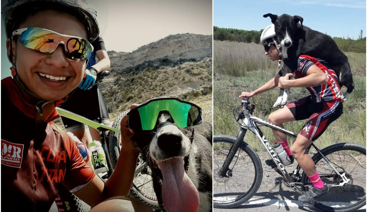 Tres ciclistas salvan la vida de un perro