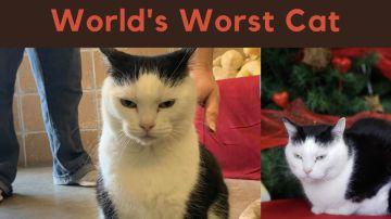 'La peor gata del mundo'