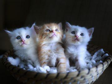 Tres gatitos (archivo)