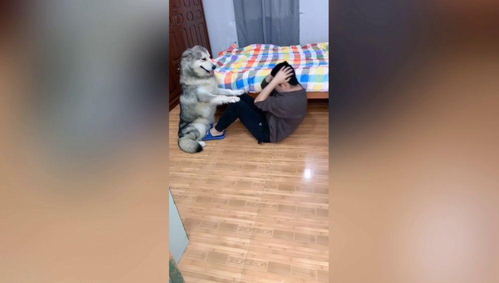 Perro ayuda a su dueño