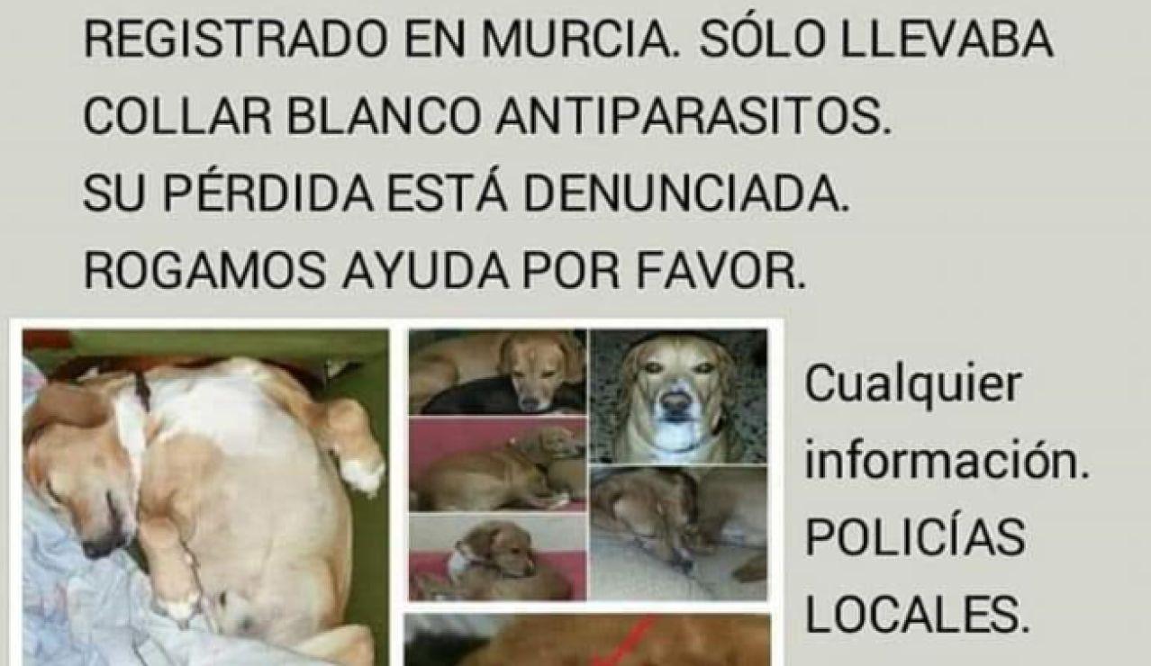 Recompensa por un perro desaparecido