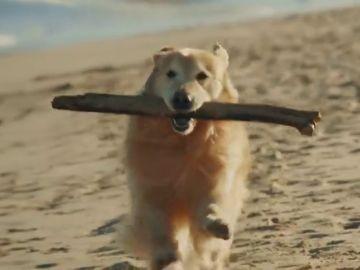 Paga un anuncio de 6 millones en la Super Bowl como agradecimiento a los veterinarios que salvaron a su perro