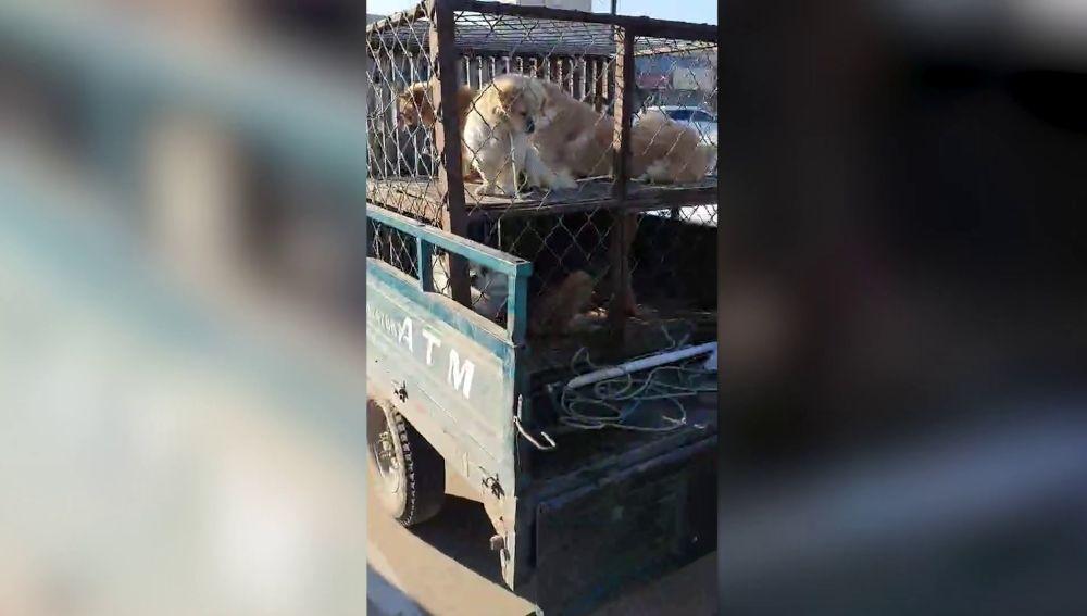 Perros en un mercado chino