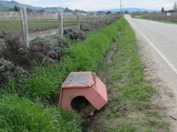 Una mujer encuentra una casita al lado de la carretera