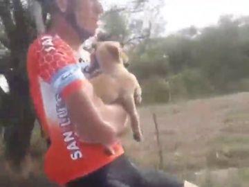 """Varios ciclistas salvan la vida a seis cachorros abandonados a punto de morir: """"Esa persona no tiene corazón"""""""