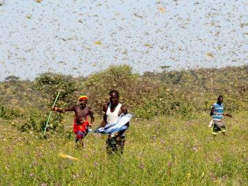 Plaga de langostas en el Cuerno de África