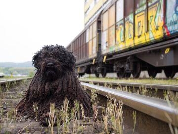 Un perro en las vías del metro