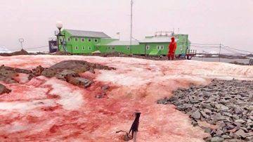 Hielo rojo de la Antártida
