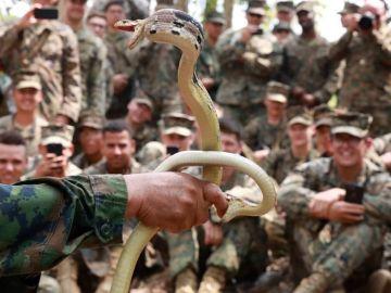 Un soldado agarra dos cobras con las manos