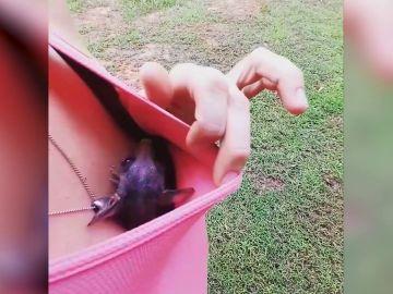 Una zarigüeya se posa sobre el pecho de una mujer
