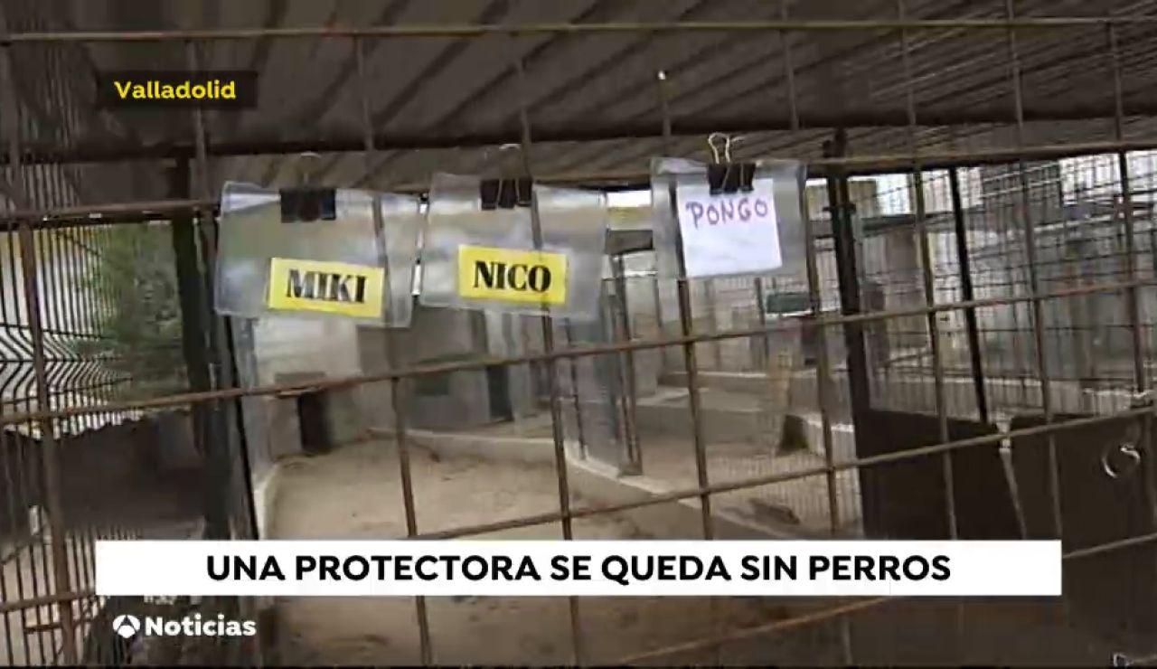 Protectora de animales en Salamanca se queda sin perros, todos son acogidos