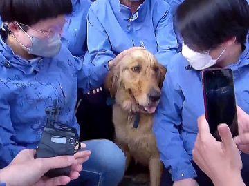 Perro cuidado por médicos chinos