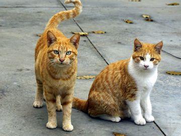 Gatos en la calle