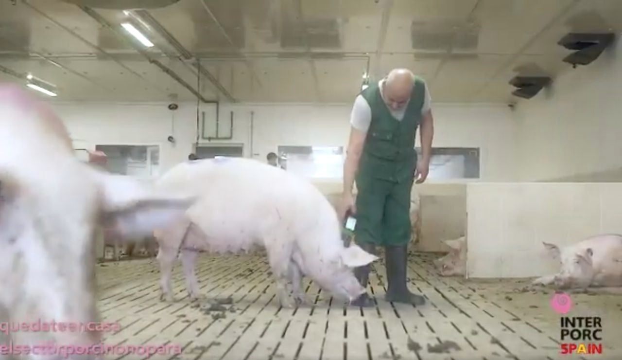 Un ganadero