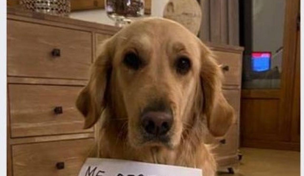 Anuncio para alquilar perros durante el estado de alarma