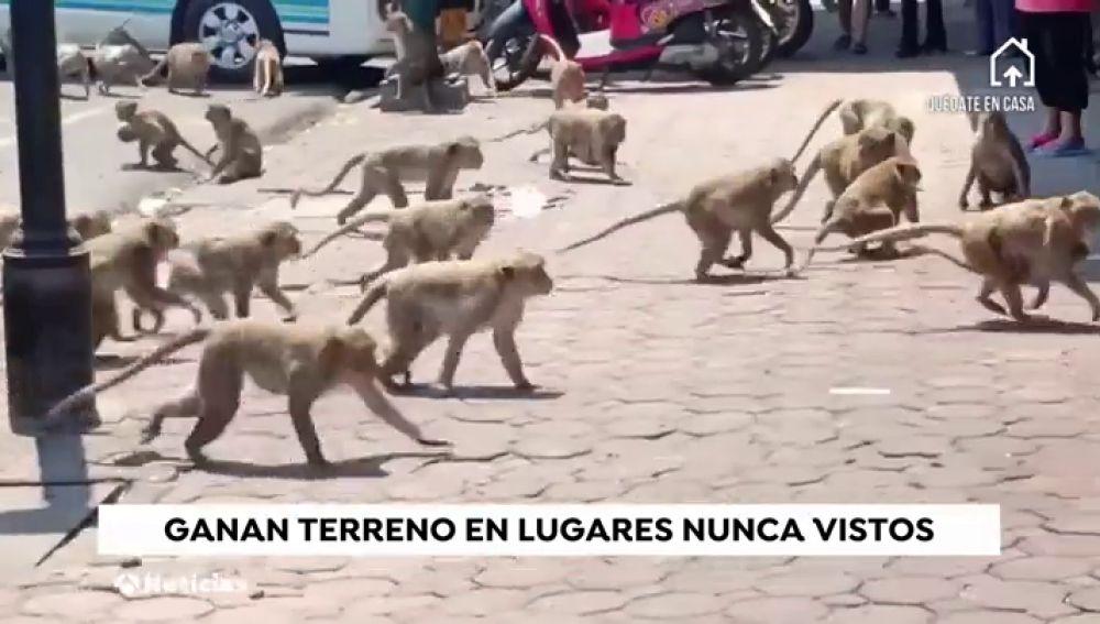 Los animales y la naturaleza conquistan las calles de todo el ...
