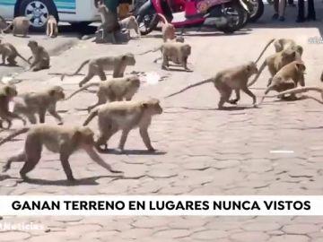 Los animales y la naturaleza conquistan las calles de todo el planeta 'gracias' al coronavirus