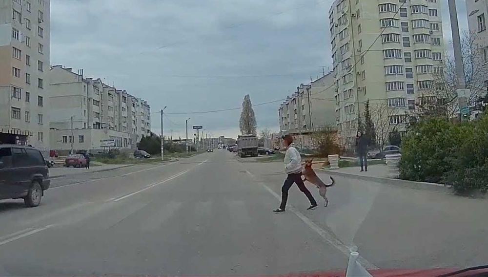 Perro cruzando la calle como un humano