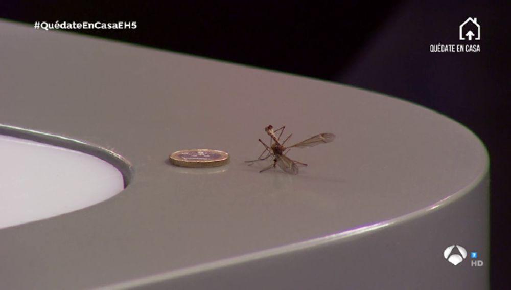 La anécdota con un mosquito gigante durante la pausa para publicidad de 'El Hormiguero 3.0'