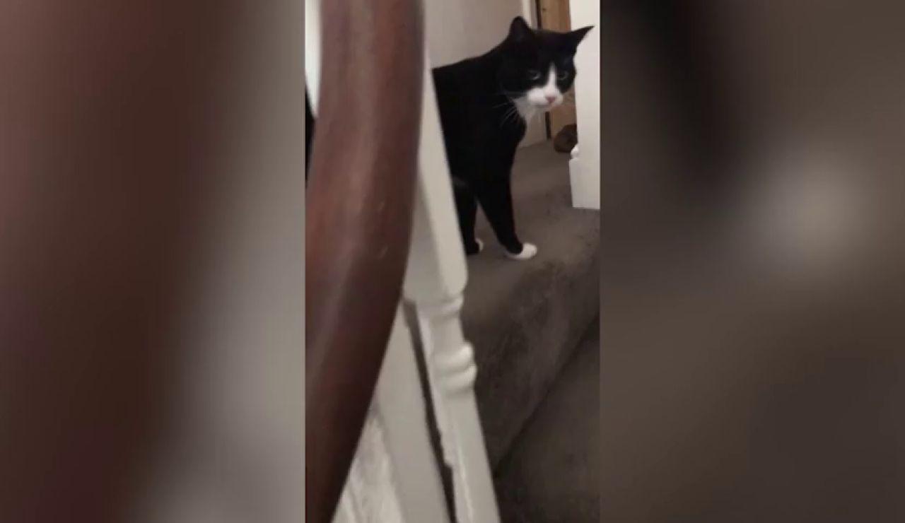 Un gato da un susto