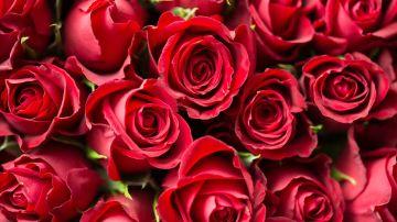 Sant Jordi 2020: Cómo enviar rosas online a pesar del coronavirus