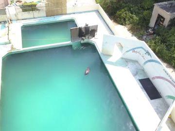 Muere el delfín que había sido abandonado en un acuario hace dos años en Japón