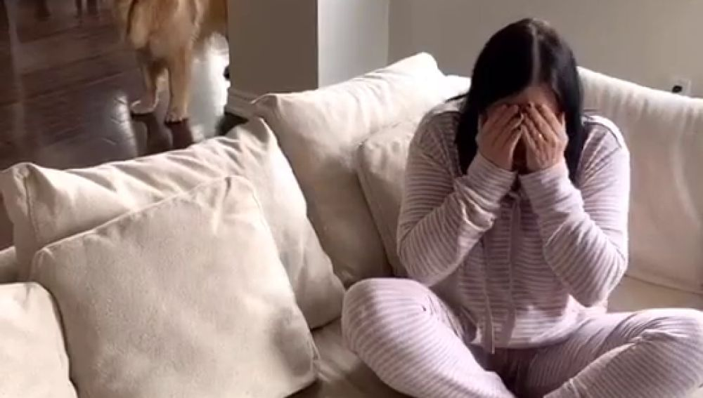 Perro consuela a su dueña