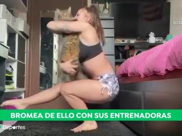 El entrenamiento de la gimnasta Roxana Popa con sus gatos durante el confinamiento por coronavirus