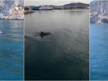 Delfines y ballenas avistados en las costas del Mediterráneo