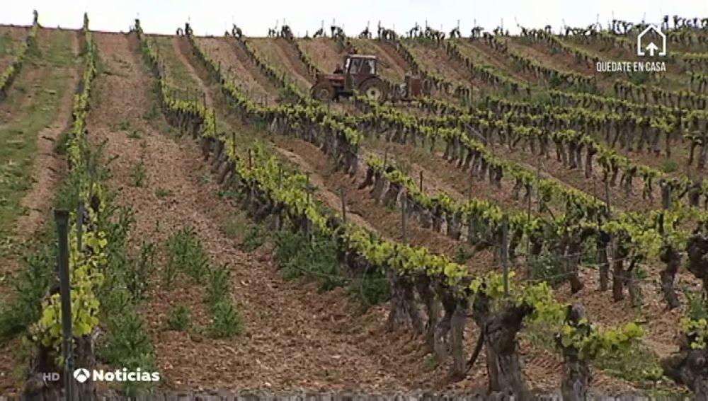 El sector del vino podría convertir la producción excedente en alcohol etílico por la crisis del coronavirus