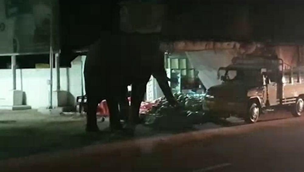 Elefante robando melones
