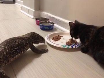 Lagarto y gata son amigos