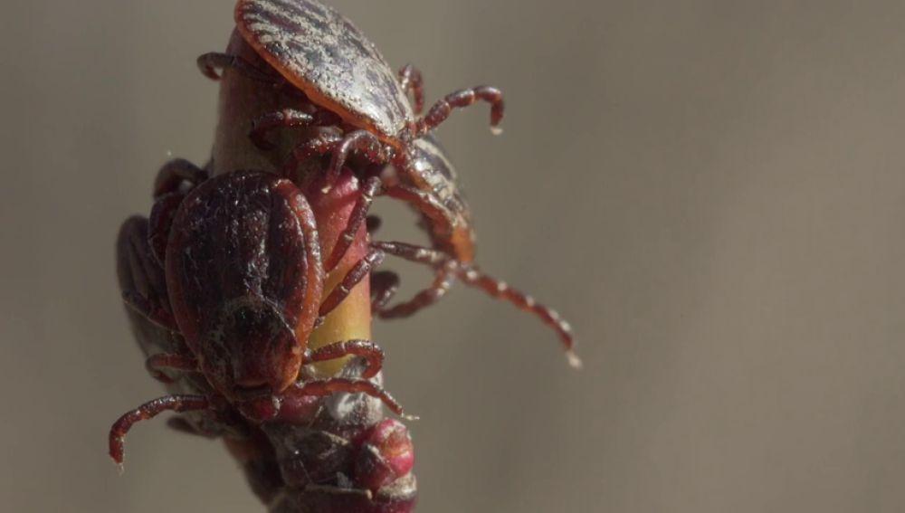 Agentes forestales avisan del peligro de las garrapatas durante la primavera