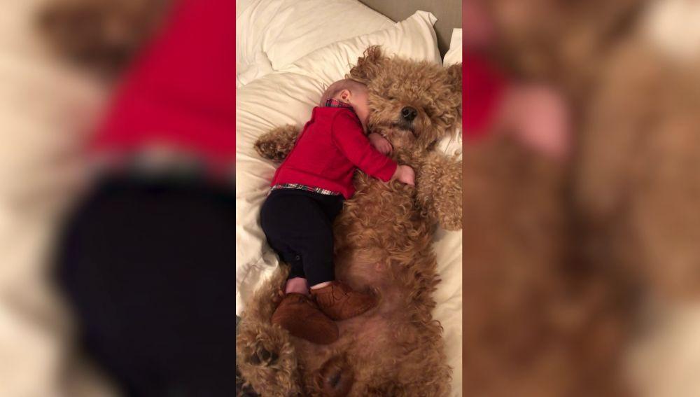 Bebé y perro abrazándose