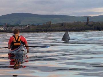 Encuentro con un tiburón