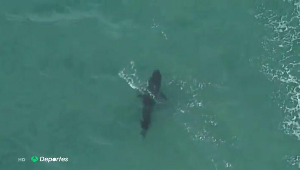 Muere un surfista tras ser atacado por un tiburón blanco en Australia