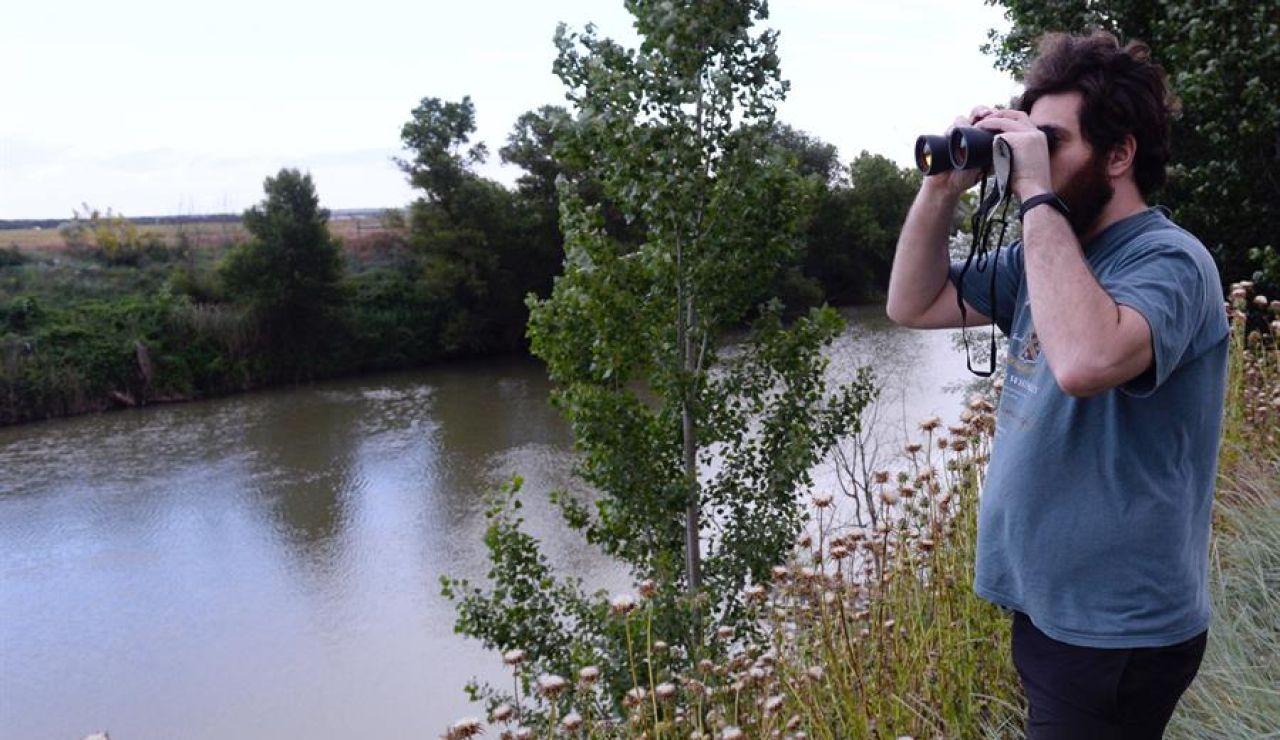 Búsqueda de un cocodrilo en el río Pisuerga